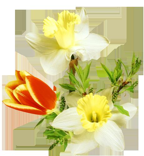 fleurs_paques_tiram_34