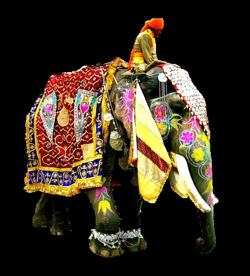 tubes_elephants_tiram_133