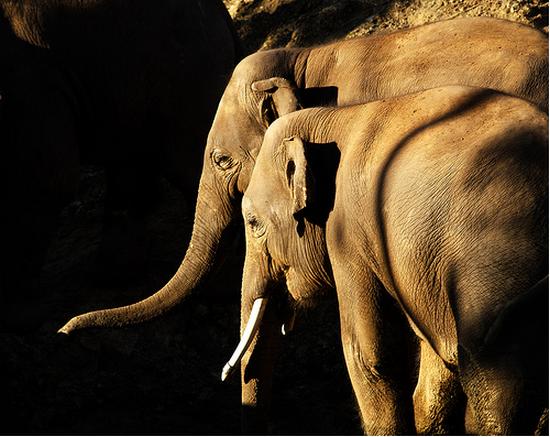 tubes_elephants_tiram_290