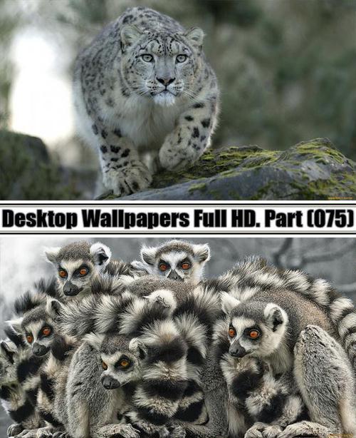 Desktop Wallpapers  HD. Part 75